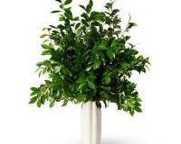 Mirabelle Tall Vase, small